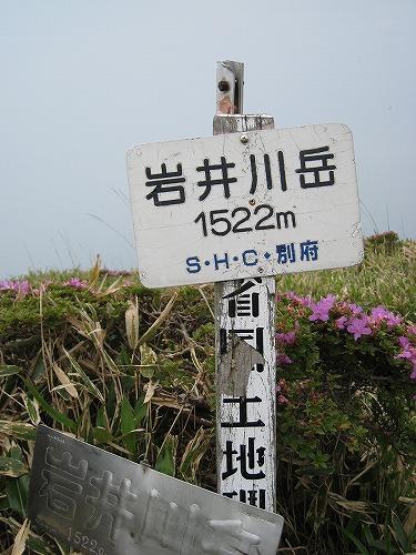 扇ヶ鼻のミヤマキリシマ 065