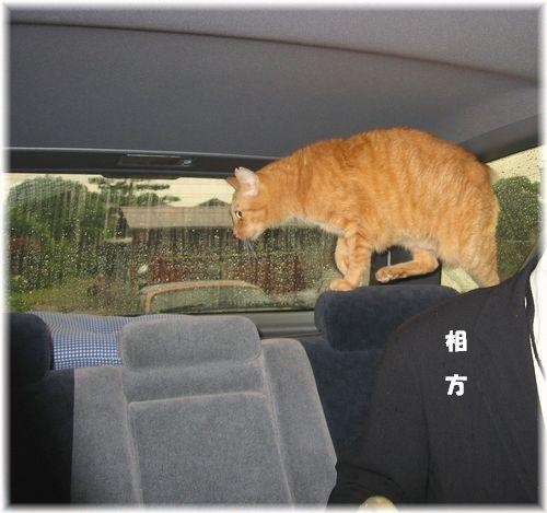 今朝のドライブ