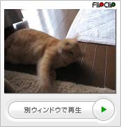デブ猫だから?