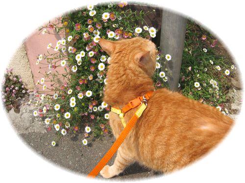 お花とボムボム