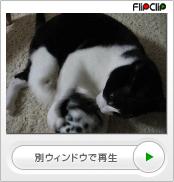 猫キック!(ナオミ)
