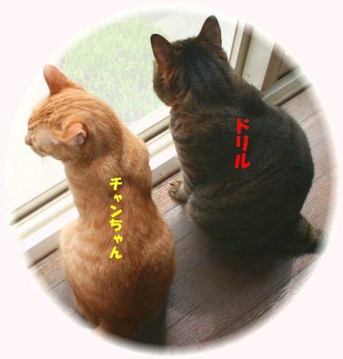 2ショット(チャンちゃん&ドリル)