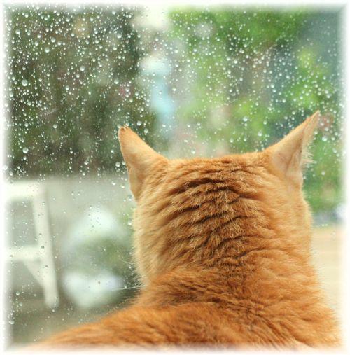 雨だな。。。