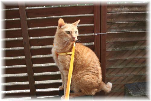 お散歩訓練 3