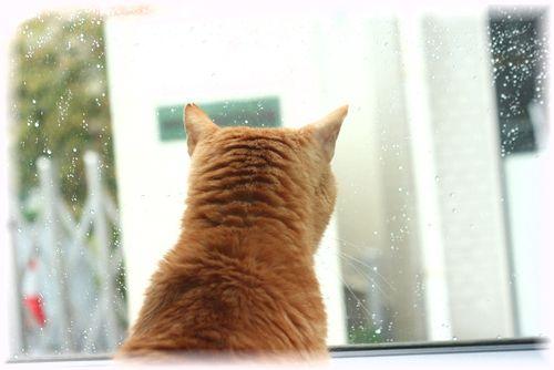 車窓から・・・ボムボム