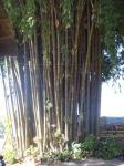 トトロの竹林?
