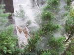露が切れない蜘蛛の巣