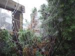 クモの巣2.