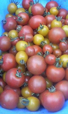 トマト20080704