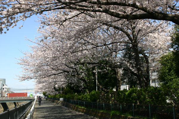 IMG_3641sakura3004.jpg