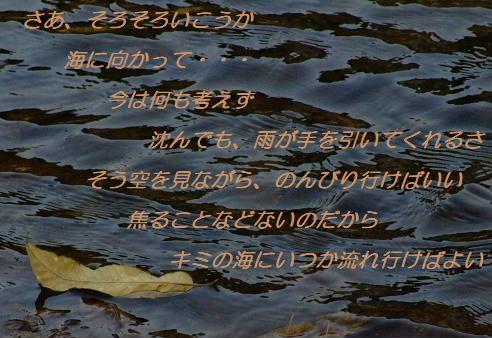 amc2008_0410a0022