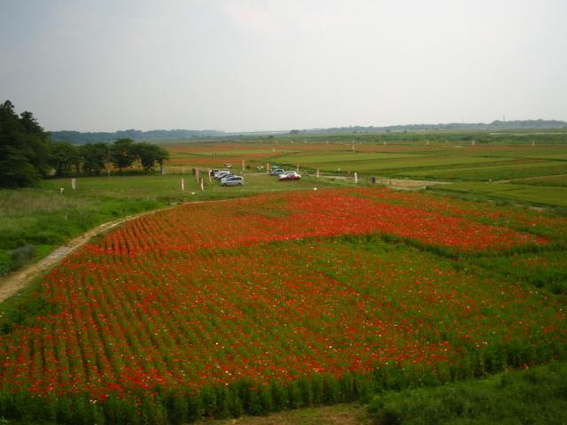 poppy-kounosu110