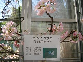 atamihayazaki203