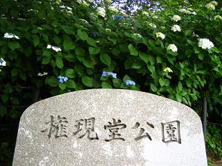 azisai-satte210