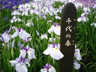 hanashoubu-shoubu080621-221