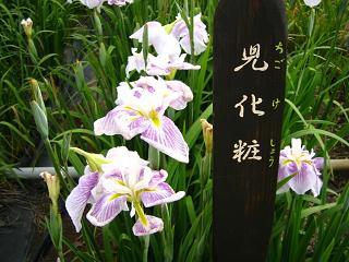 hanashoubu-shoubu080621-225