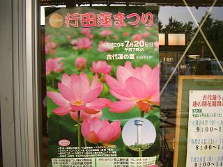 hasu-gyouda210