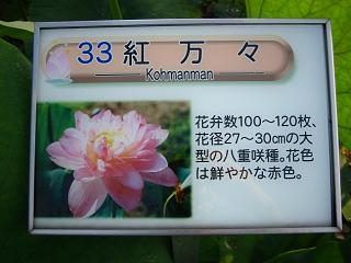 hasu-gyouda219