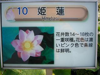 hasu-gyouda230