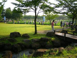 hasu-gyouda241