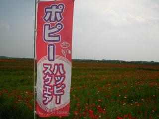 poppy-kounosu212
