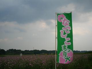 poppy-kounosu213