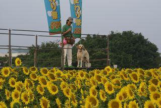 ひまわり広場 花