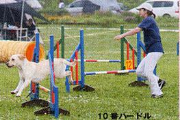 アジ ドッグスポーツジャーナル