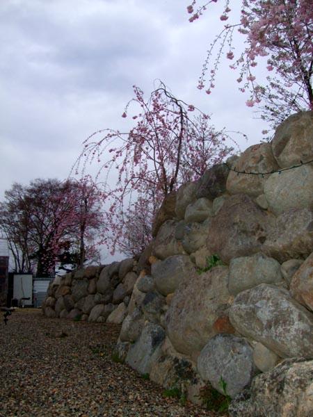 2008_0417春0046