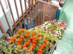 gsale0807_flower1.jpg
