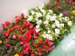 gsale0807_flower3.jpg