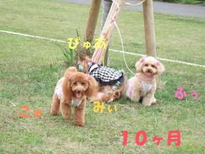 みぃたん&こぉたん 10ヶ月!(^^)!