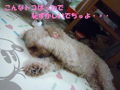 ふぅたん寝る