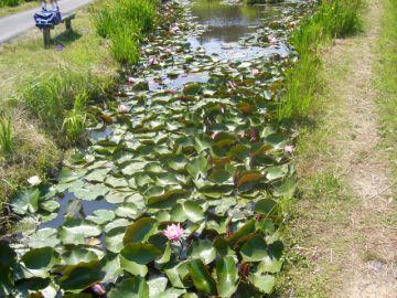 落ちた池w