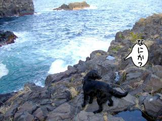 伊豆高原の旅(6)