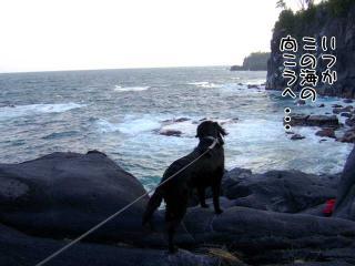 伊豆高原の旅(7)