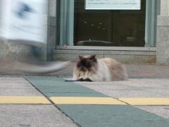 CAT on the Street!
