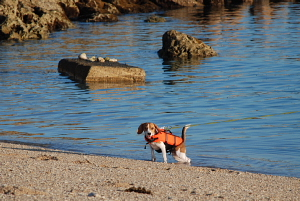 ソフィが海へ