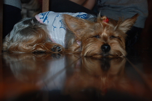 サンディ眠いの