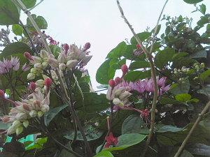 ツブツブ花