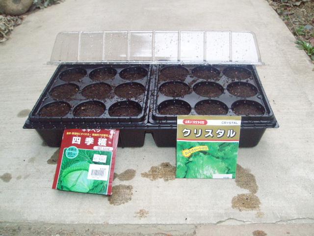 春野菜の種まきH200322