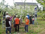 子供達の花摘みH200501