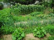 雑草の畑H200627
