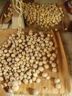 ジャガイモ収穫H200706