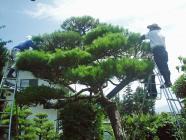 三松園H200713