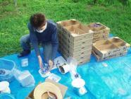 倫己オパール収穫H200723