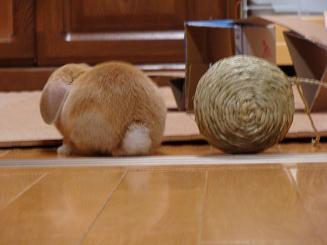 リンリンボール2つ