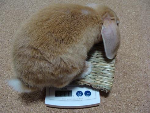体重計エラー
