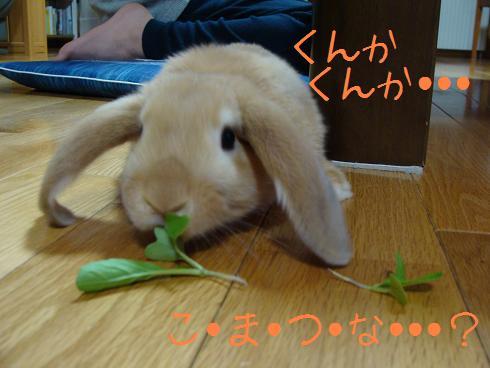 小松菜くんかくんか
