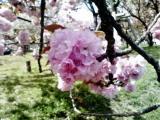 08-04-20_003_convert_20080428000103.jpg
